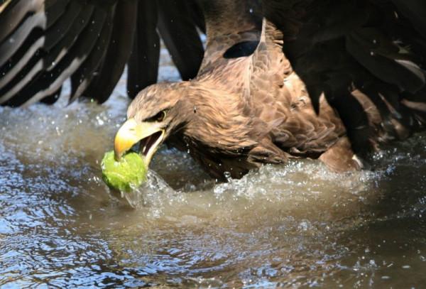 002_eagle