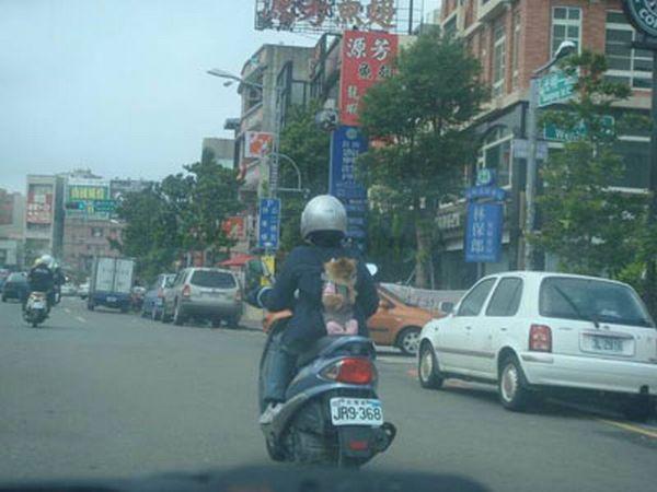 dog_transport_01