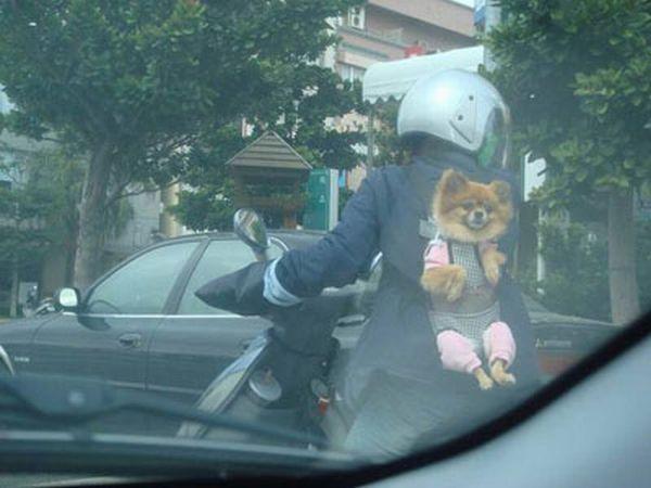 dog_transport_03