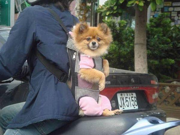 dog_transport_04