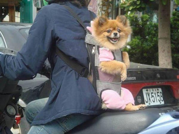 dog_transport_05