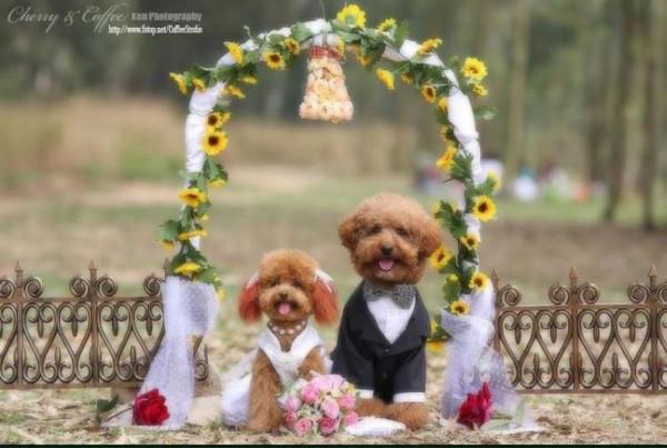 dog_wedding_01