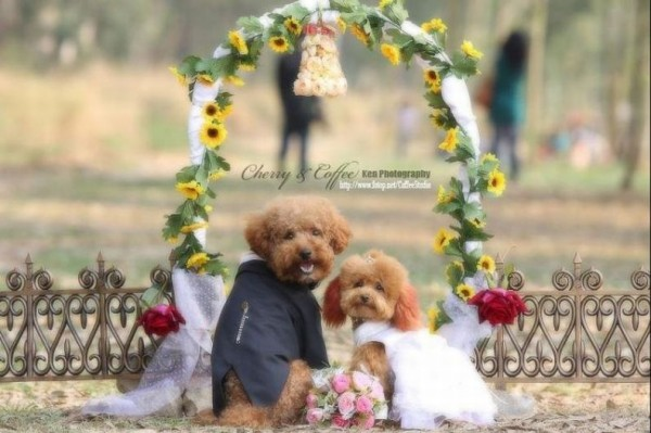 dog_wedding_02