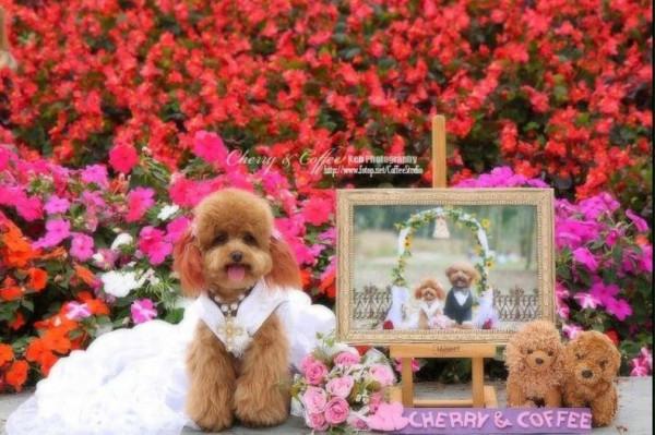 dog_wedding_03