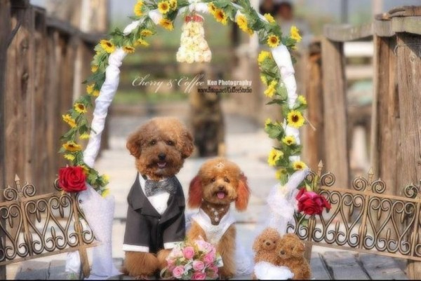 dog_wedding_04