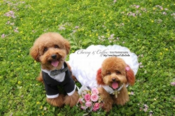 dog_wedding_05