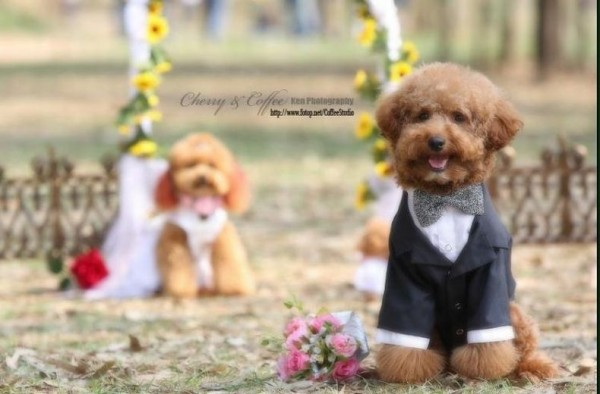 dog_wedding_06