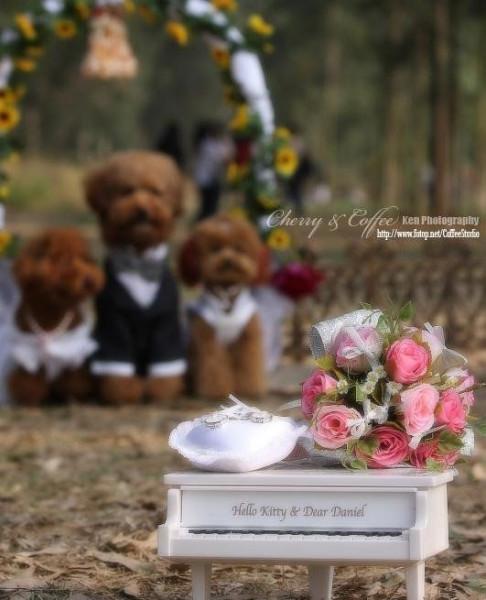 dog_wedding_07