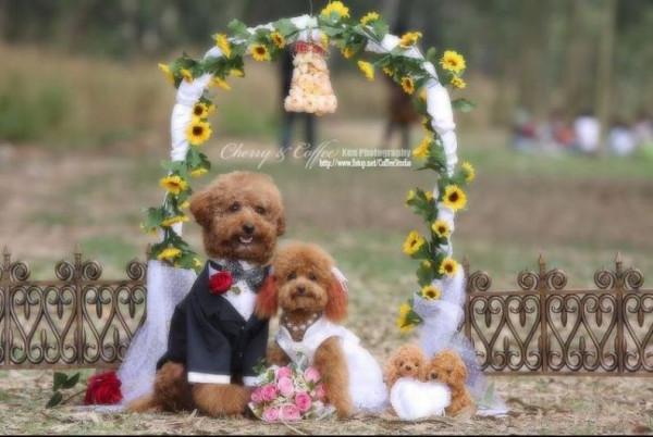 dog_wedding_08