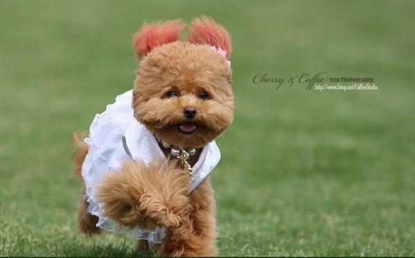 dog_wedding_09