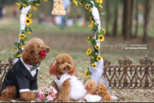 dog_wedding_10