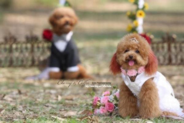 dog_wedding_11