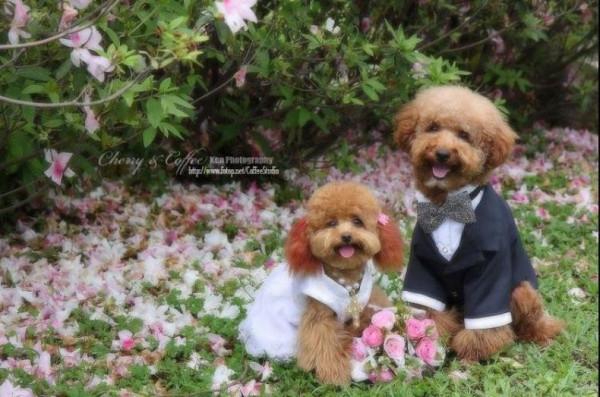 dog_wedding_12