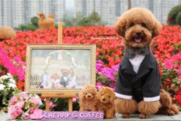 dog_wedding_13