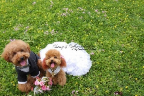 dog_wedding_14