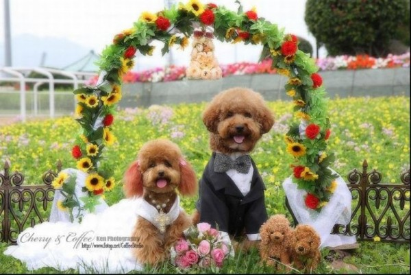 dog_wedding_15