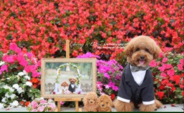 dog_wedding_16