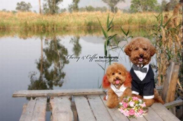 dog_wedding_17
