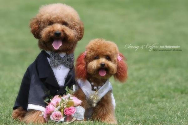 dog_wedding_18