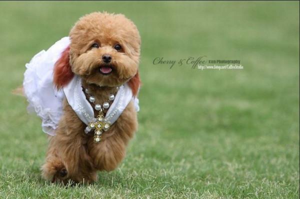 dog_wedding_19