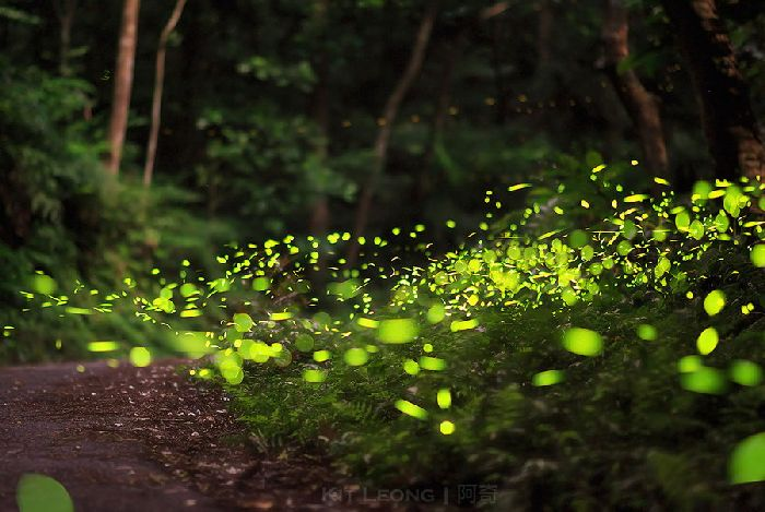 Light_bugs_07