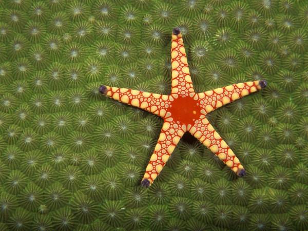 morskie-zvezdy-4