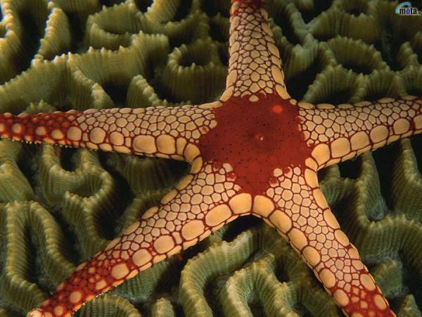 morskie-zvezdy-2