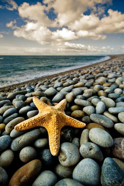 morskie-zvezdy-5