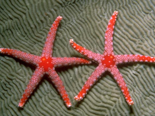 morskie-zvezdy-8