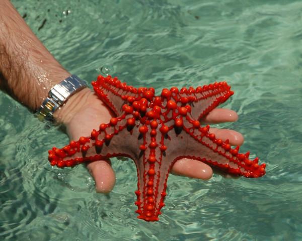 morskie-zvezdy-9