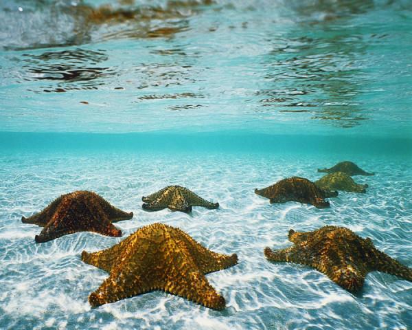 morskie-zvezdy-10