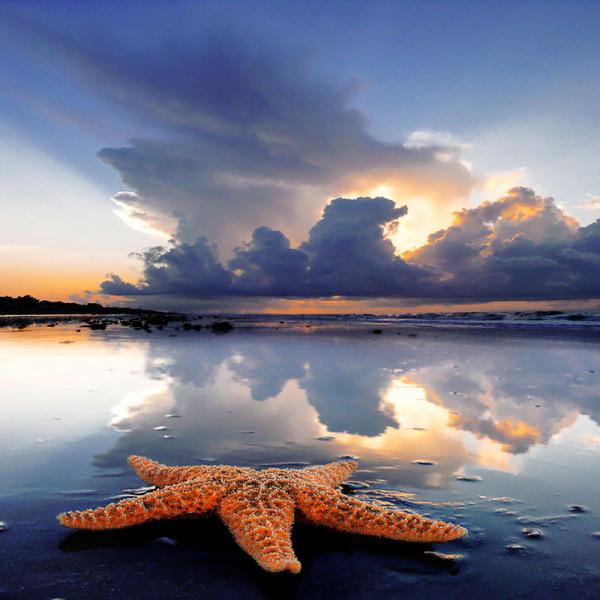 morskie-zvezdy-1