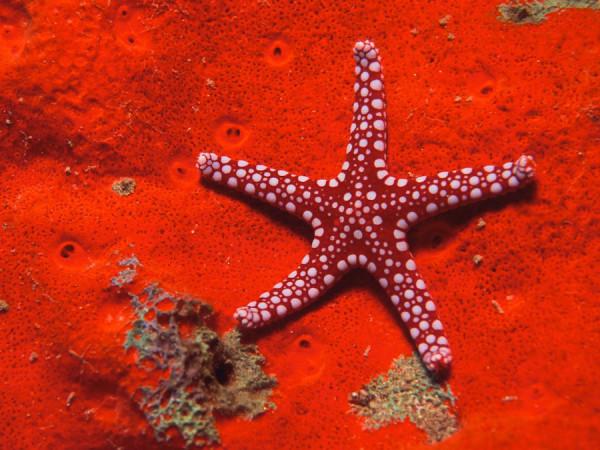 morskie-zvezdy-12