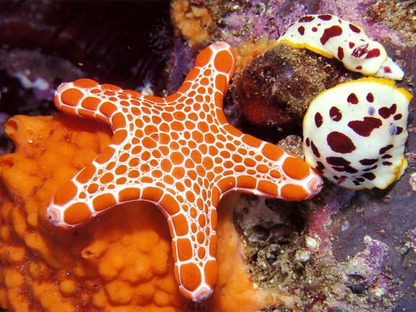 morskie-zvezdy-14