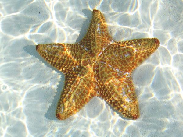 morskie-zvezdy-15