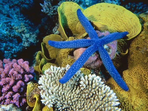 morskie-zvezdy-17