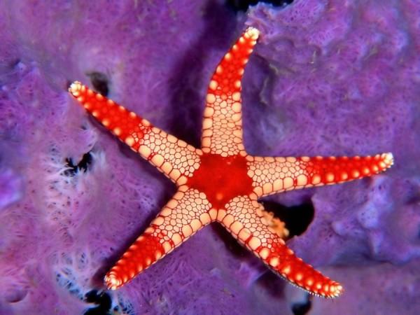 morskie-zvezdy-18