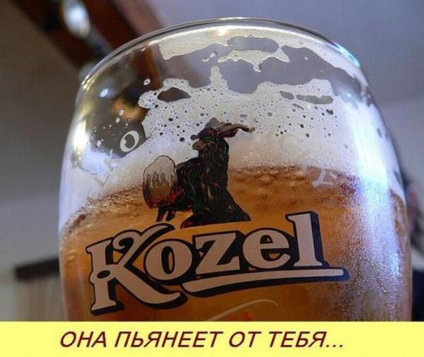koxel-004