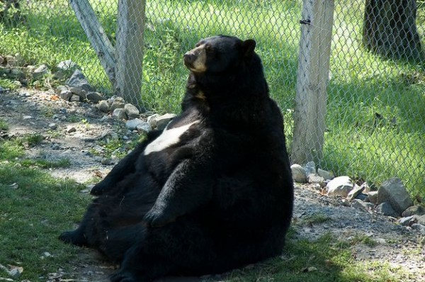 fat_animals_07