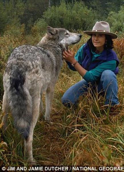 wolf-001