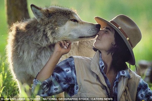 wolf-003