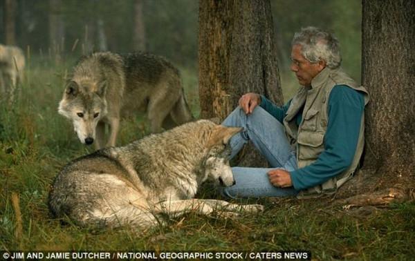 wolf-004