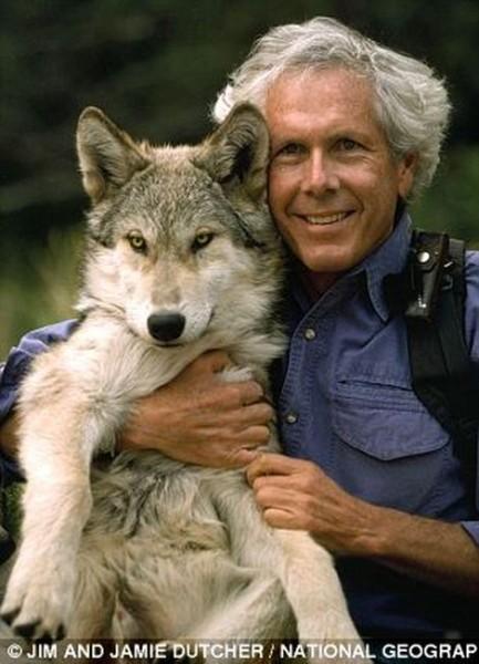 wolf-015