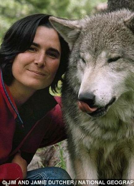 wolf-016