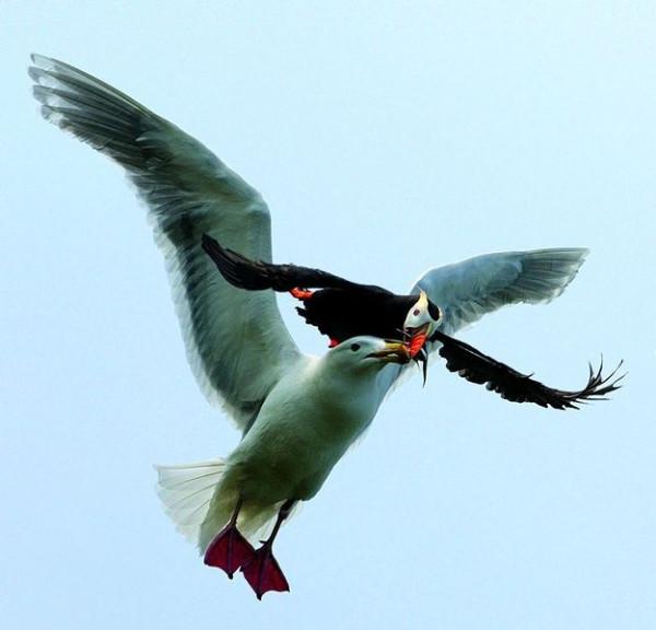 ptica-003