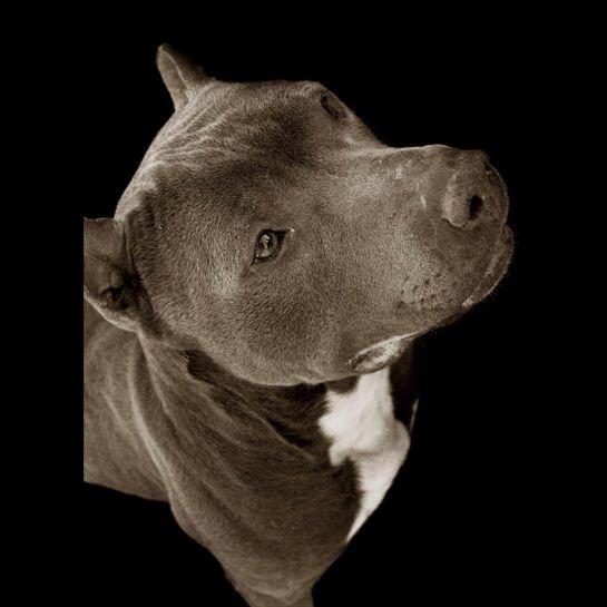 Portraits_dog_01