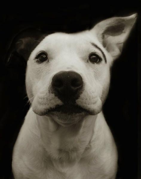 Portraits_dog_02