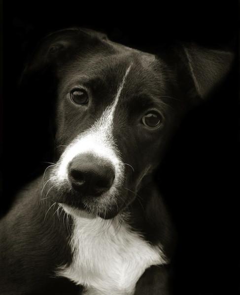Portraits_dog_03