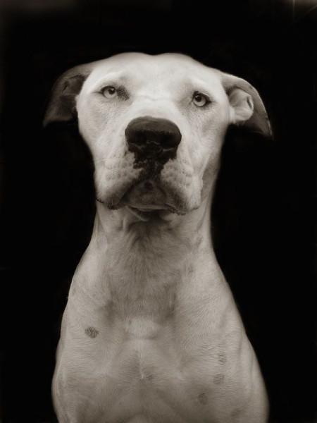 Portraits_dog_05