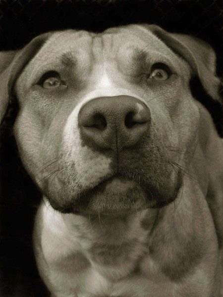 Portraits_dog_06